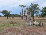 southern_africa - flora